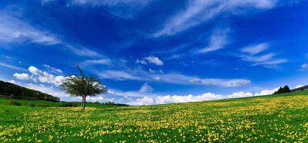 Wiosna krajobrazu - zielone pola, niebieskie niebo