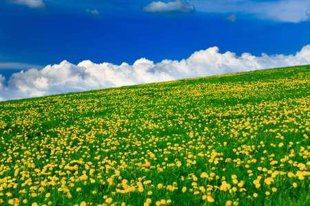 Spring landscape - green fields, the blue sky Stock Photo - 5117806