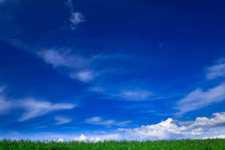 Spring landscape - green fields, the blue sky Stock Photo - 5168678