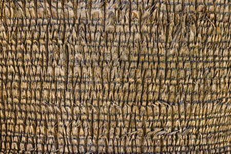 a palm tree natural texture Banco de Imagens