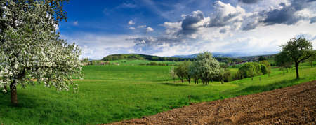 Spring landscape - green fields, the blue sky Stock Photo - 5219007