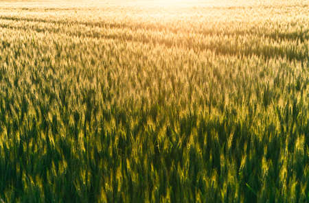 a detailed photo of a field at sunset time Stock Photo - 5413935