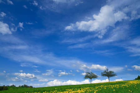 Spring landscape - green fields, the blue sky Stock Photo - 5464887