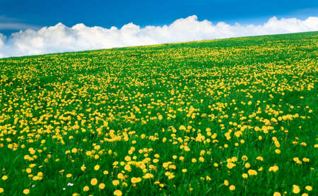 Spring landscape - green fields, the blue sky Stock Photo - 5474906
