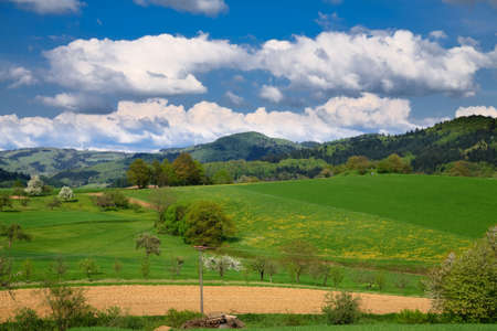Spring landscape - green fields, the blue sky Stock Photo - 5484279