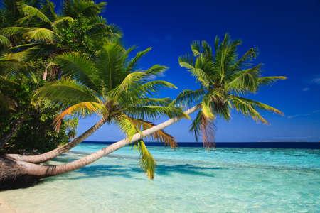 clima tropical: Paraíso tropical en las Maldivas con palmeras y cielo azul