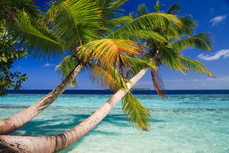 Tropical Paradise at Maldives with palms and blue sky Stock Photo - 5630469