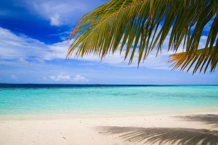 tropical paradise: Tropical Paradise at Maldives with palms and blue sky