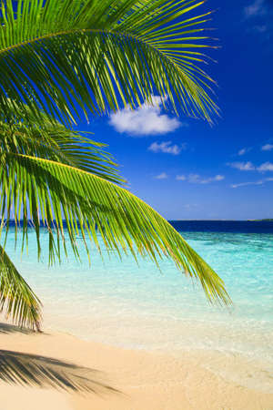 Tropical Paradise at Maldives with palms and blue sky photo