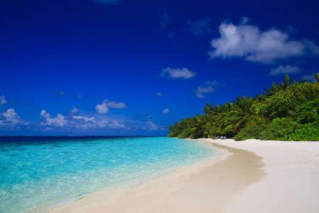 Tropikalna Paradise na Malediwach z Palm i błękitne niebo