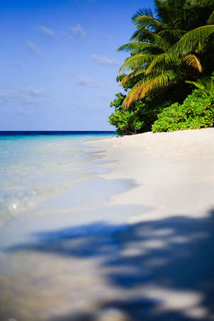 Tropical Paradise at Maldives with palms and blue sky Stock Photo - 5681462