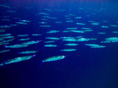 under water world at Maldives blue clear sea Stock Photo - 5742386