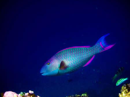 under water world at Maldives blue clear sea photo