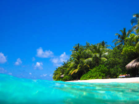 caribbean climate: Tropical Paradise at Maldives with palms and blue sky view from water Archivio Fotografico