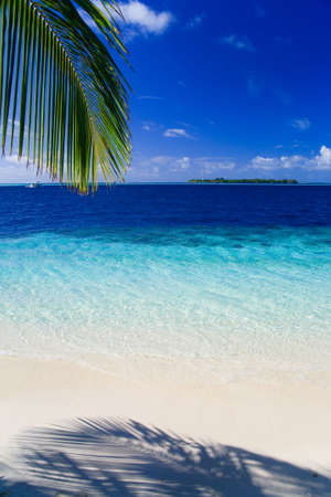 Tropical Paradise at Maldives with palms and blue sky Stock Photo - 5892021