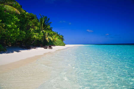 Tropical Paradise at Maldives with palms and blue sky Stock Photo - 5892011