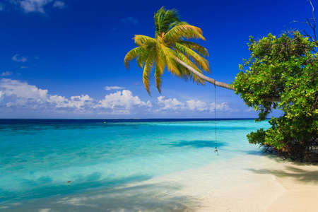 beach scene: Tropical Paradise at Maldives with palms and blue sky