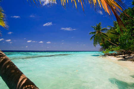 Tropical Paradise at Maldives with palms and blue sky Stock Photo - 5891989