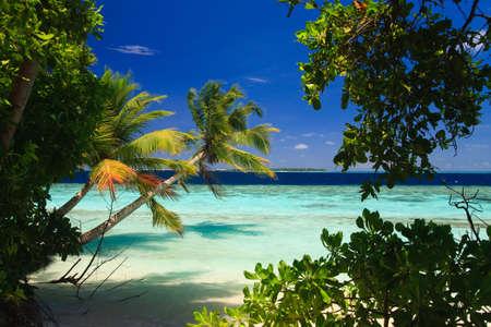 clima tropical: Paraíso tropical en Maldivas con palmeras y el cielo azul