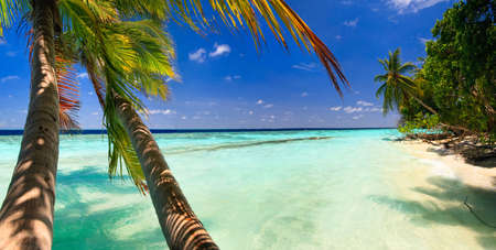 Tropical Paradise at Maldives with palms and blue sky Banco de Imagens - 6172634