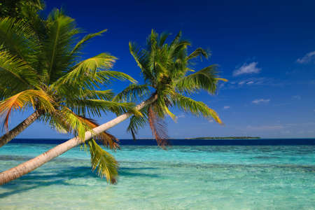 Tropical Paradise at Maldives with palms and blue sky Stock Photo - 6241966
