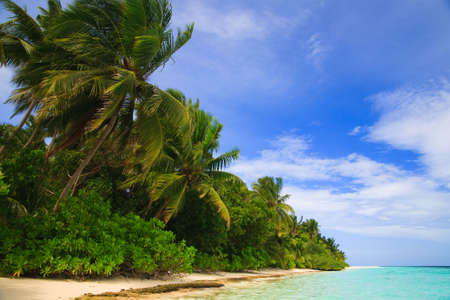 Tropical Paradise at Maldives with palms and blue sky Stock Photo - 6658048