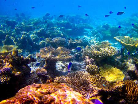 under water world at Maldives blue clear sea Stock Photo