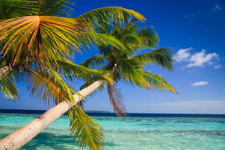 Tropical Paradise at Maldives with palms and blue sky Stock Photo - 6978604