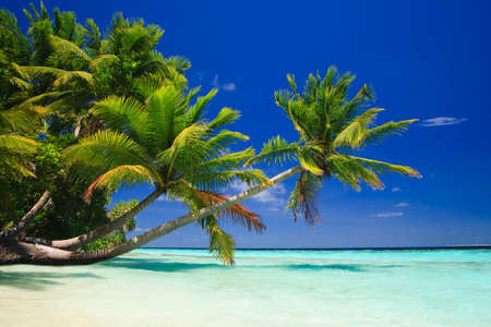 Tropical Paradise at Maldives with palms and blue sky Stock Photo - 6978601