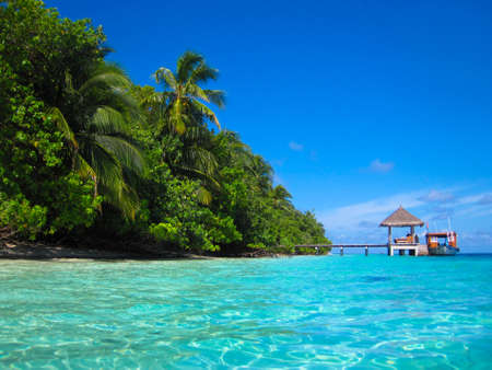 Tropical Paradise at Maldives with palms and blue sky Stock Photo - 7049395