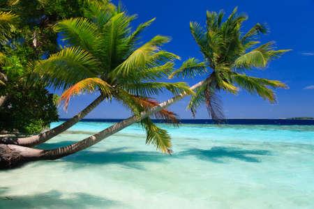 Tropikalna Paradise na Malediwach z palmami i błękitne niebo