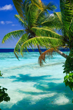 Tropical Paradise at Maldives with palms and blue sky Banco de Imagens - 7049394
