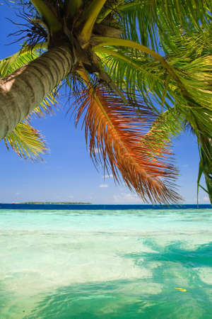 Tropical Paradise at Maldives with palms and blue sky Stock Photo - 7228704