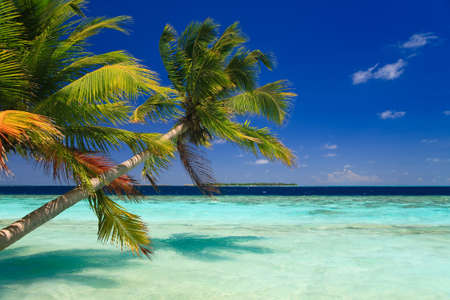 Tropical Paradise at Maldives with palms and blue sky