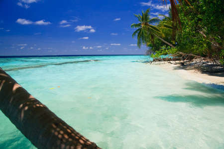 Tropical Paradise at Maldives with palms and blue sky Stock Photo - 7252356