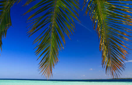 Tropical Paradise at Maldives with palms and blue sky Stock Photo - 7351105