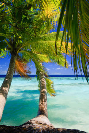 Tropical Paradise at Maldives with palms and blue sky Stock Photo - 7351138