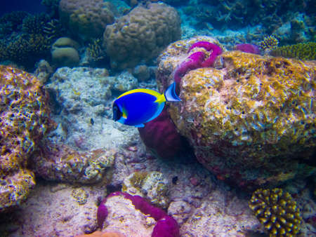 w obszarze świata wody na Malediwach niebieski wyczyść Morza