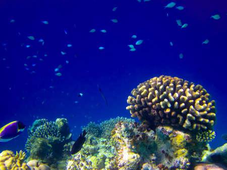 under water world at Maldives blue clear sea Banco de Imagens