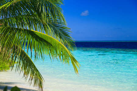 Tropical Paradise at Maldives with palms and blue sky Stock Photo - 8071365