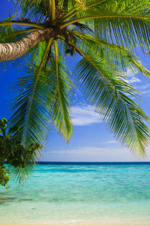 Tropical Paradise at Maldives with palms and blue sky Banco de Imagens - 8071369