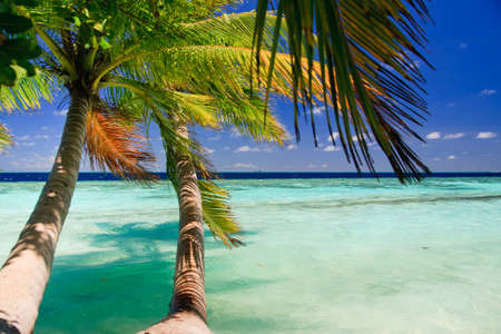 Tropical Paradise at Maldives with palms and blue sky Stock Photo - 8071364