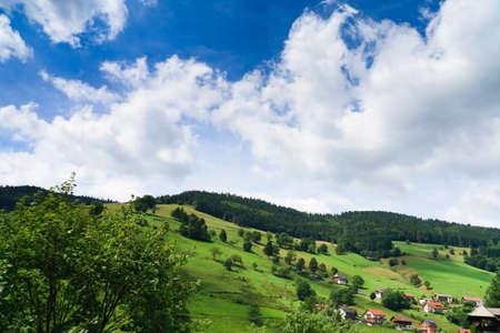 Sumer landscape - green fields, the blue sky Stock Photo - 8071146