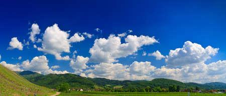 Sumer landscape - green fields, the blue sky Stock Photo - 8139810