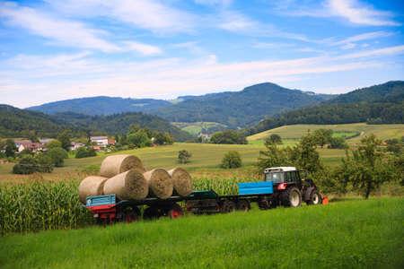 dairy farm: a farmer driving throw corn field under bug blue sky