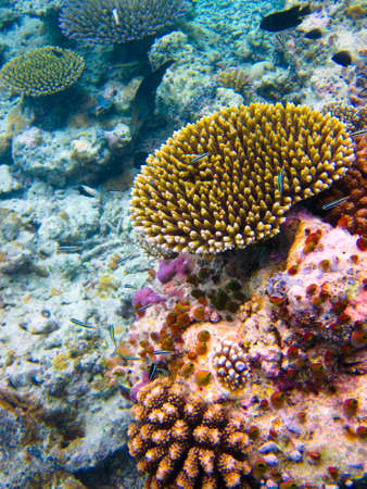 under water world at Maldives blue clear sea Stock Photo - 14412781