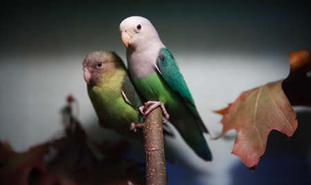 crowd tail: Parakeet portrait with wounderful background