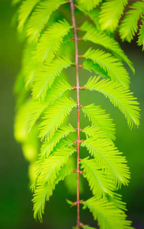 natur: detail of green natural leafs in natur