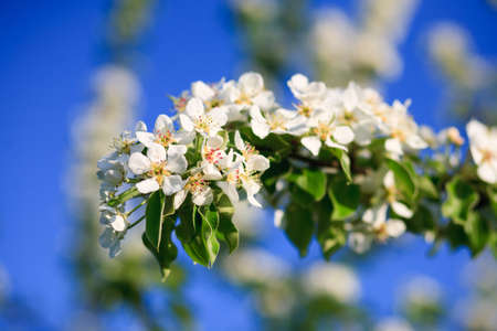 natur: naturale, fiori freschi in natur con sfondo bello