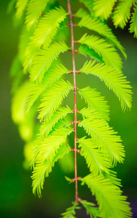 detail of green natural leafs in natur